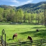 Barn-to-Home Renovation on a Picturesque Horse Farm in Secluded Tessentee near Franklin, NC - #12